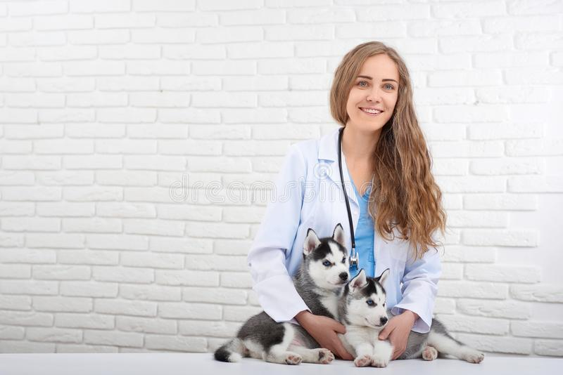 Veterinário de sorriso que importa-se aproximadamente dois cães roncos bonitos foto de stock royalty free