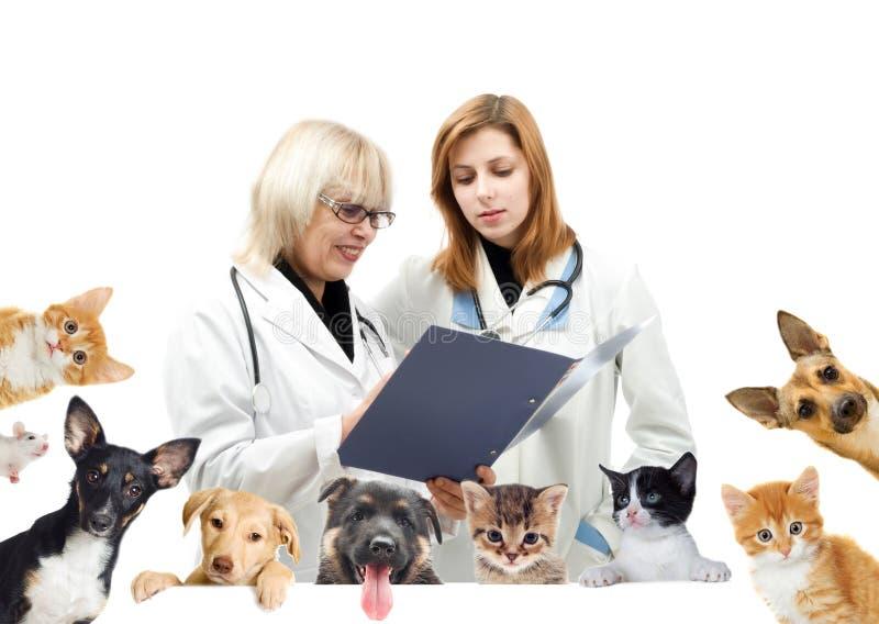 Veterinário e cão e gato de sorriso imagem de stock royalty free