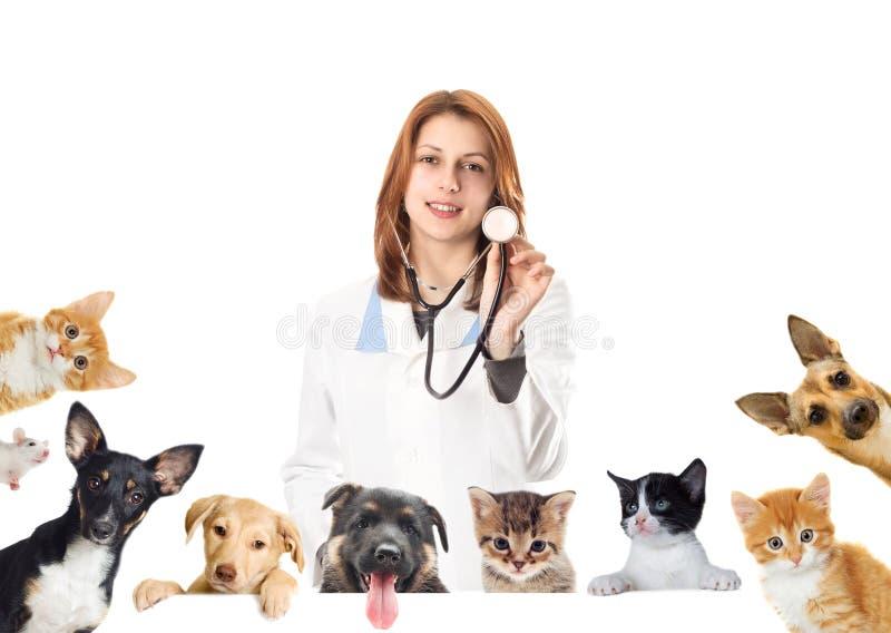 Veterinário e cão e gato de sorriso foto de stock