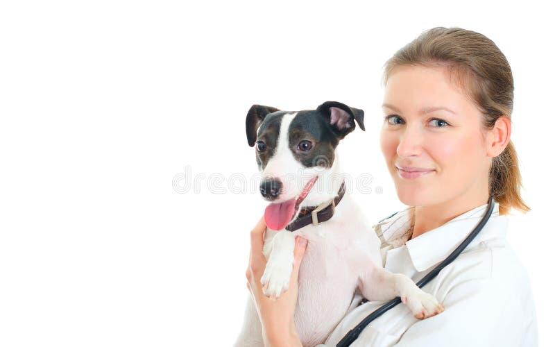 Veterinário fêmea que guardara o cão pequeno. fotografia de stock royalty free