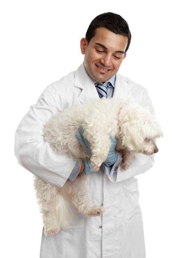 Veterinário que carreg um cão pequeno fotografia de stock royalty free
