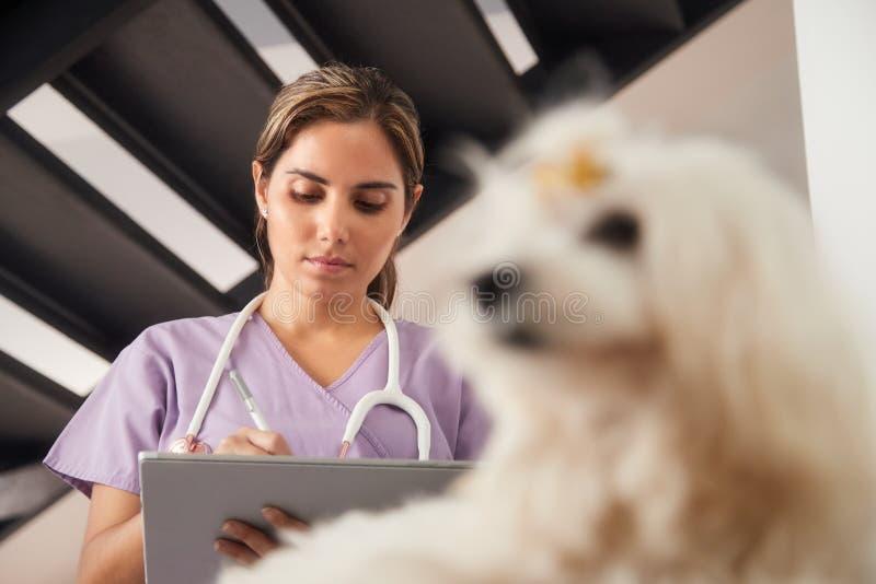 Veterinário que usa o tablet pc durante a chamada de casa com cão fotografia de stock royalty free