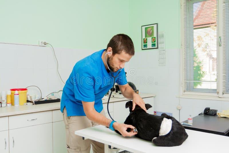veterinär- arbete fotografering för bildbyråer