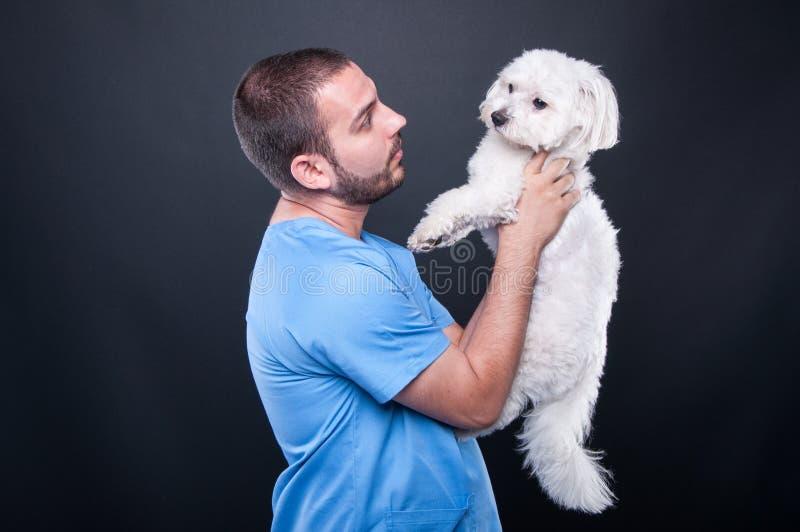Veterinär- bära skurar den hållande hunden för konsultation arkivbild