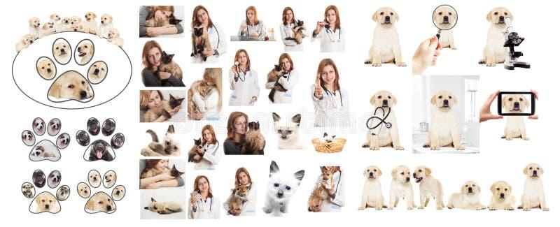 Veterinär- doktor royaltyfria foton