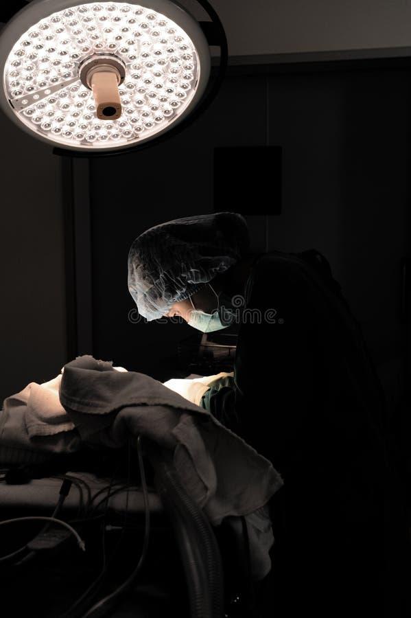 Veterinär- doktor i operationrum för kirurgiskt arkivbilder