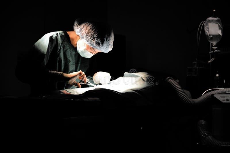 Veterinär- doktor i operationrum för kirurgiskt royaltyfria bilder
