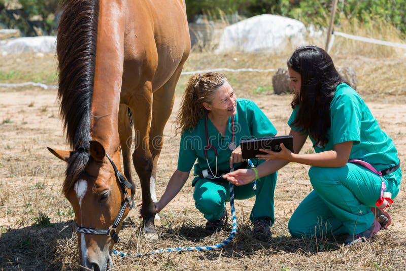Veterinär- hästar på lantgården royaltyfri fotografi