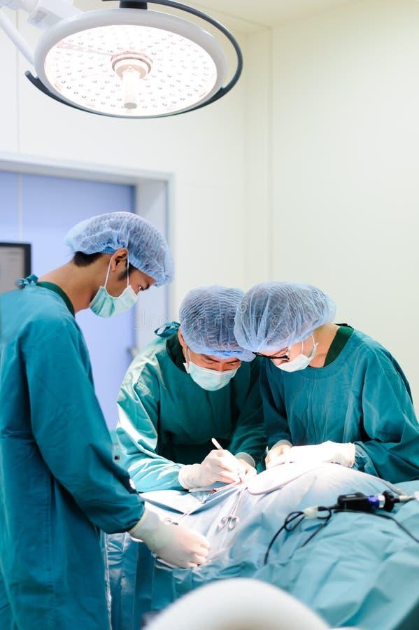 Veterinär- kirurger i operationrum royaltyfria foton