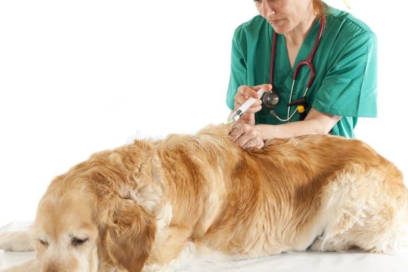 Veterinär- konsultation arkivbild