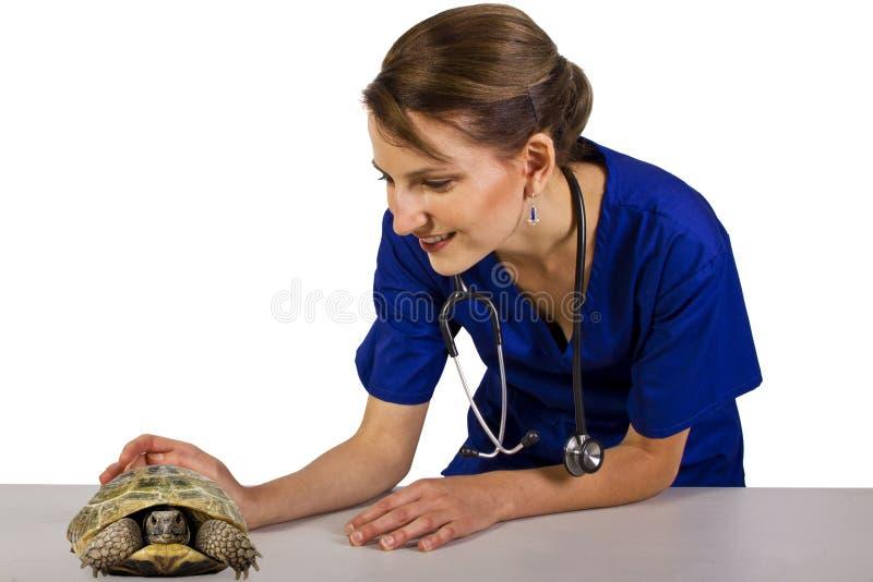 Veterinär med en reptil arkivfoton
