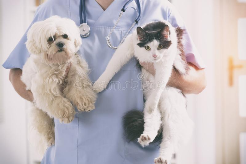 Veterinär med hunden och katten royaltyfri bild