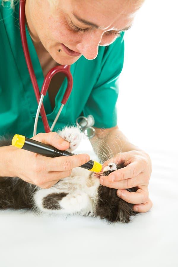 Veterinär- med kattungen royaltyfri foto