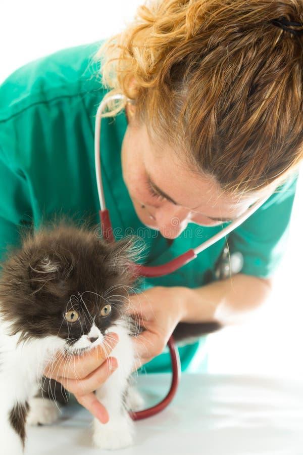 Veterinär- med kattungen arkivfoton