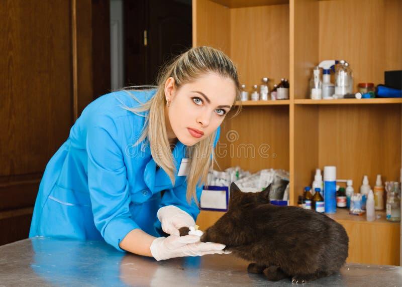 Veterinär och katt fotografering för bildbyråer