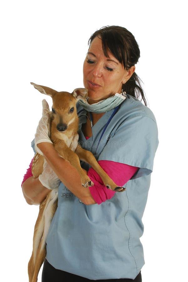 Veterinär- omsorg för djurliv royaltyfria bilder