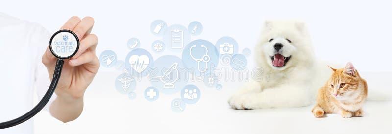 Veterinär- omsorgbegrepp hand med stetoskopet, hunden och katten med royaltyfri fotografi