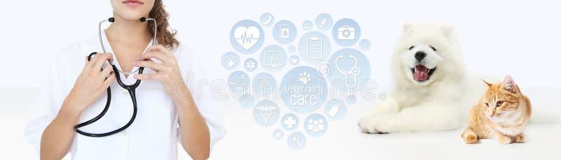 Veterinär- omsorgbegrepp veterinär med stetoskopet, hund och fotografering för bildbyråer