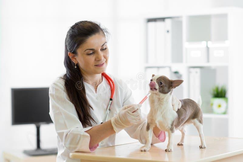 Veterinär som ger vaccineringhunden royaltyfri bild