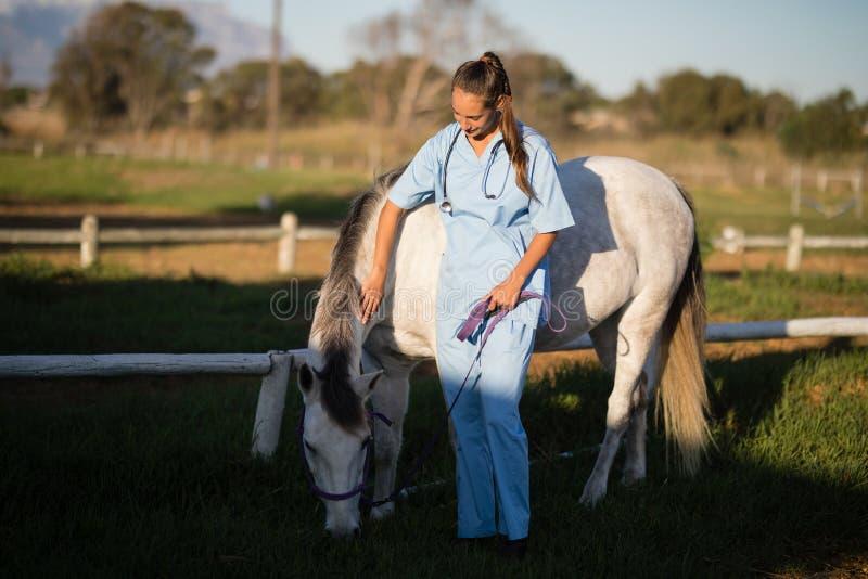Veterinär som slår hästen i lantgård fotografering för bildbyråer