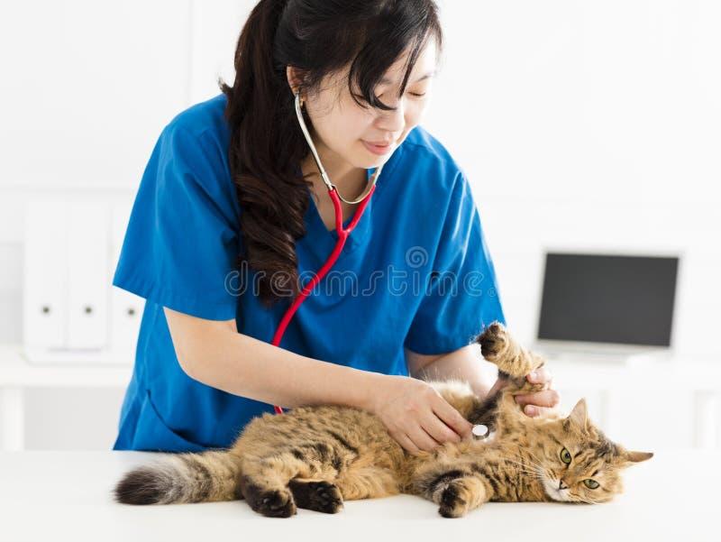 Veterinär som undersöker en kattungekatt royaltyfri fotografi