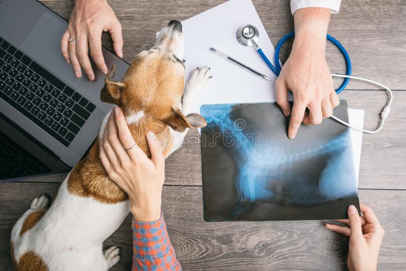 Veterinär- undersökningskonsultation med en röntgenstråle Hund och ägare och doktorshänder på tabellen med datoren royaltyfri fotografi