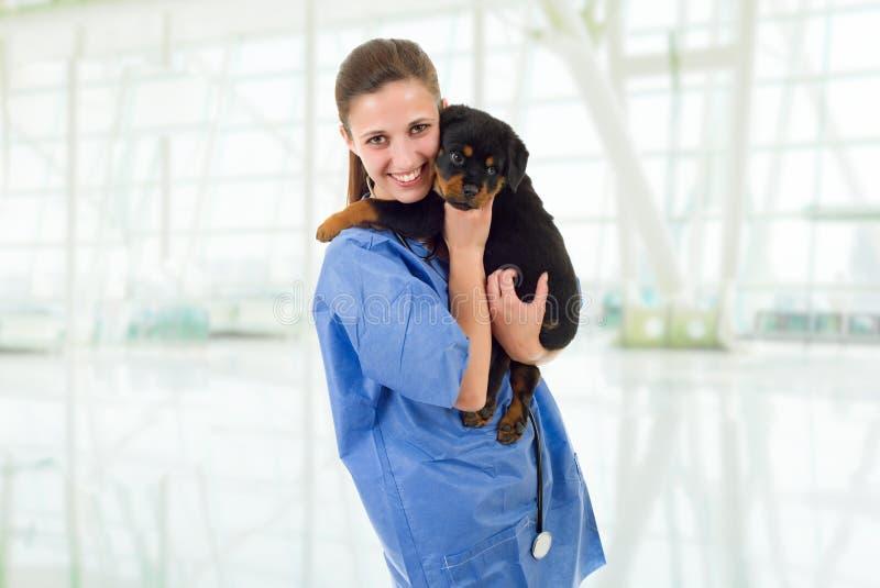 veterinair royalty-vrije stock foto