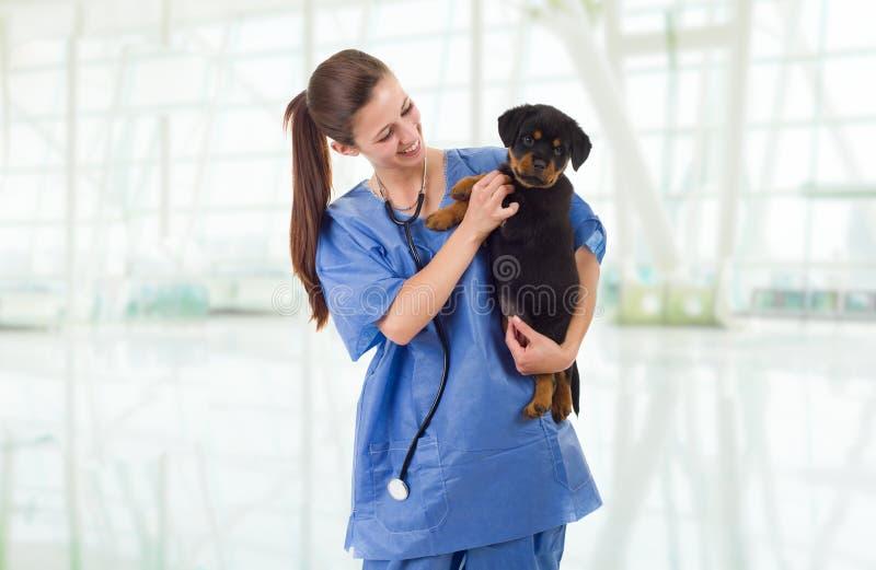 veterinair royalty-vrije stock foto's