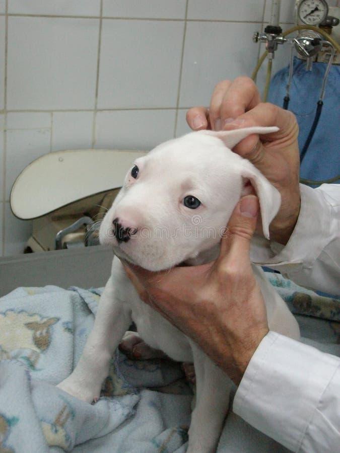 veterinair stock foto's