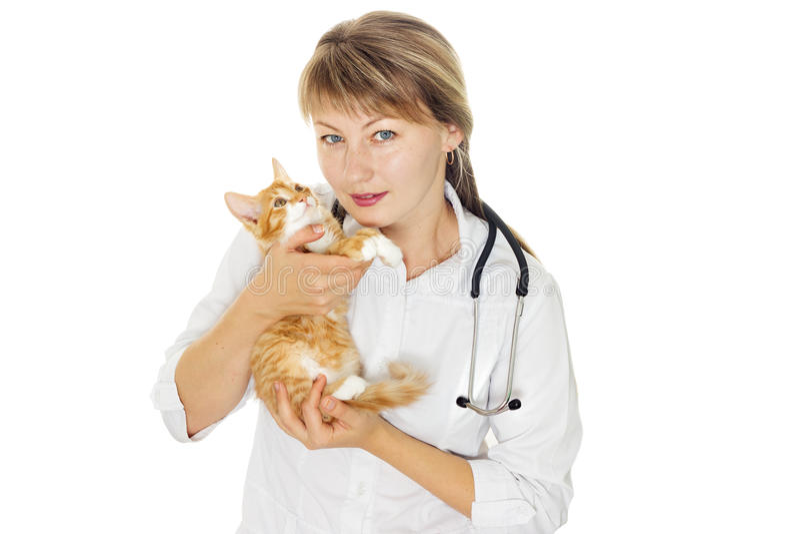 Veterinair arts en katje royalty-vrije stock afbeelding