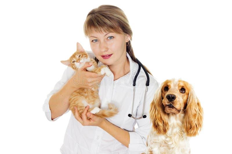 Veterinair arts en katje stock fotografie