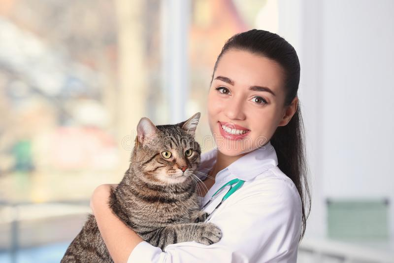 Veterinair doc. met kat in dierlijke kliniek stock afbeeldingen