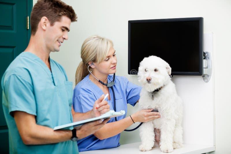 Veterinair Doctors Examining een Hond bij Kliniek royalty-vrije stock fotografie