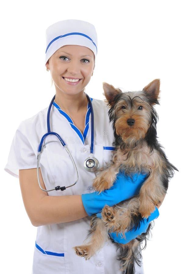 Veterinair met een hond voor een overzicht royalty-vrije stock afbeelding