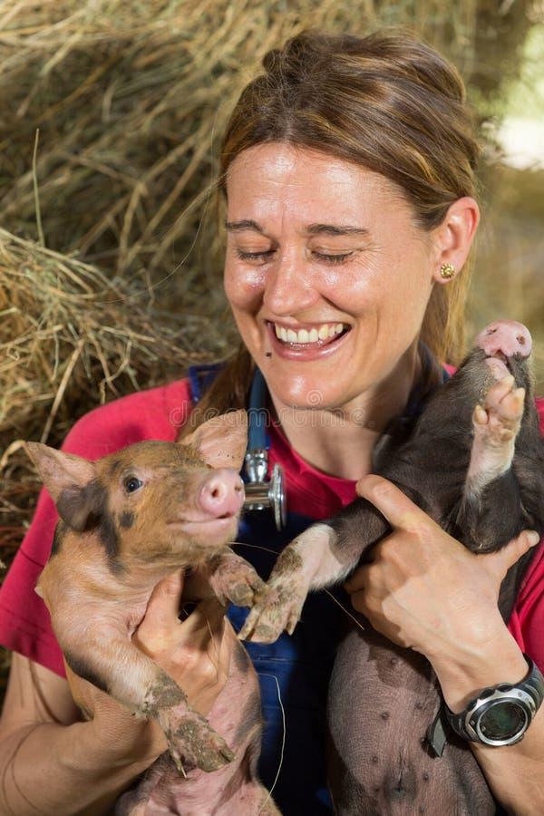 Veterinair met twee varkens stock afbeelding