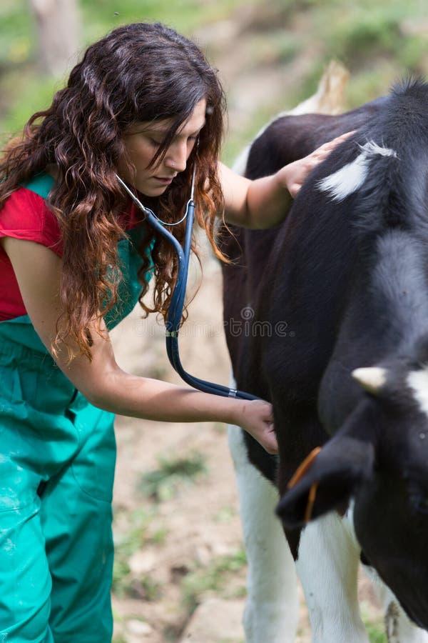 Veterinair op een landbouwbedrijf stock foto