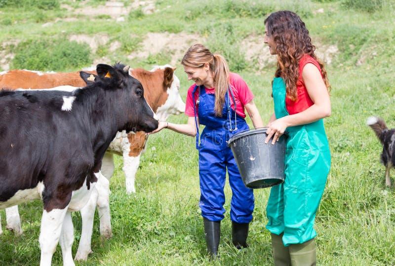 Veterinair op een landbouwbedrijf stock foto's