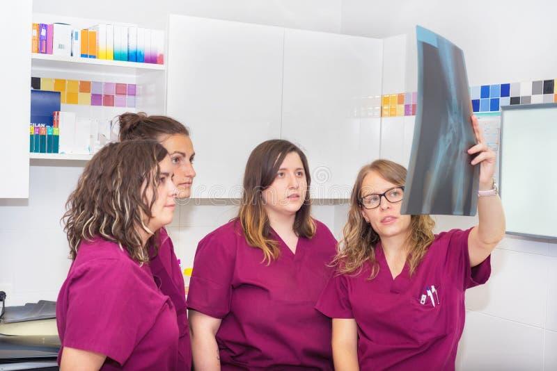 Veterinair team die een hond` s röntgenstraal onderzoeken royalty-vrije stock foto's