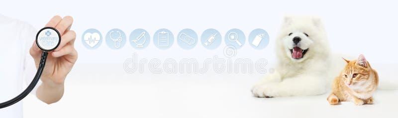 Veterinair zorgconcept hand met stethoscoop, hond en kat met royalty-vrije stock foto's