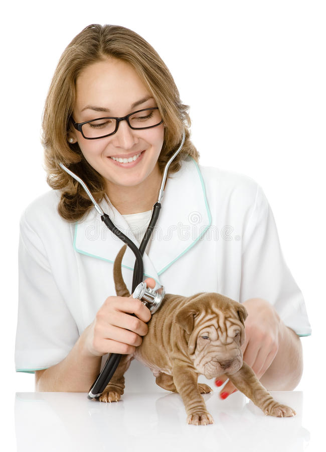 Veterinaire arts die een controle van een hond van het sharpeipuppy maken. ISO stock afbeelding