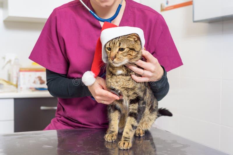 Veterinaire arts die een leuke kat met de hoed van de Kerstman onderzoeken stock afbeelding