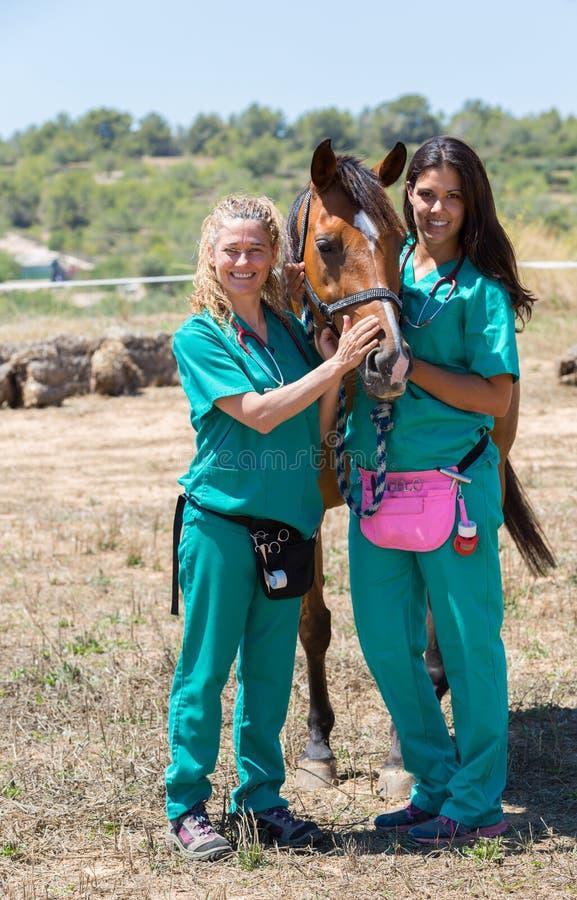 Veterinaire paarden op het landbouwbedrijf stock foto