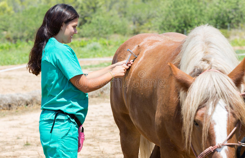 Veterinaire paarden op het landbouwbedrijf royalty-vrije stock afbeeldingen