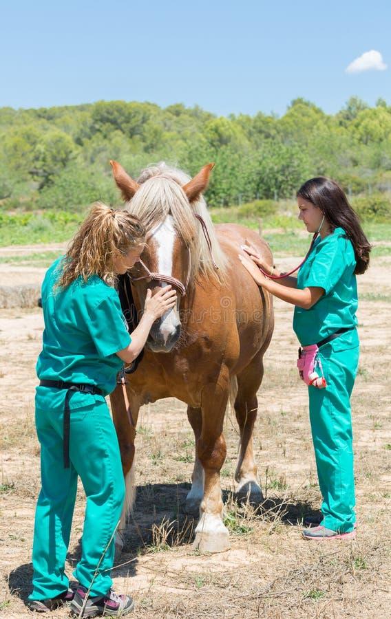 Veterinaire paarden op het landbouwbedrijf stock foto's
