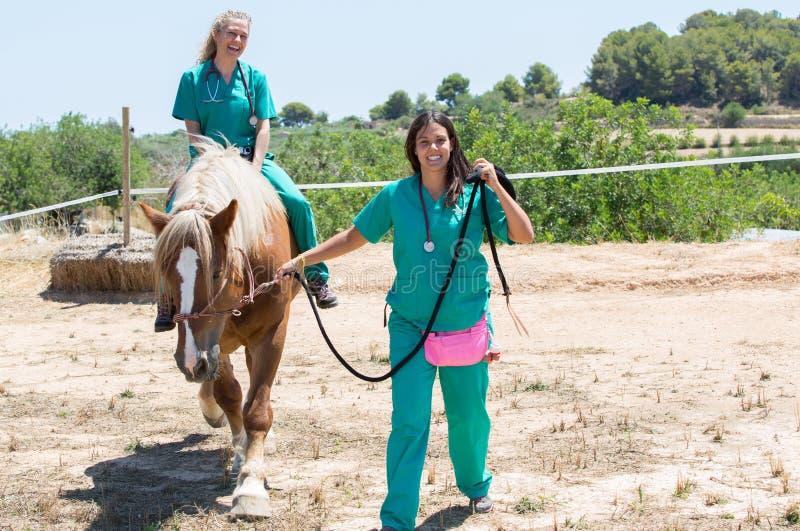 Veterinaire paarden op het landbouwbedrijf stock afbeeldingen
