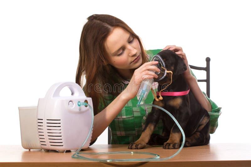Veterinar和小狗与吸入器有吸入器的 免版税库存照片