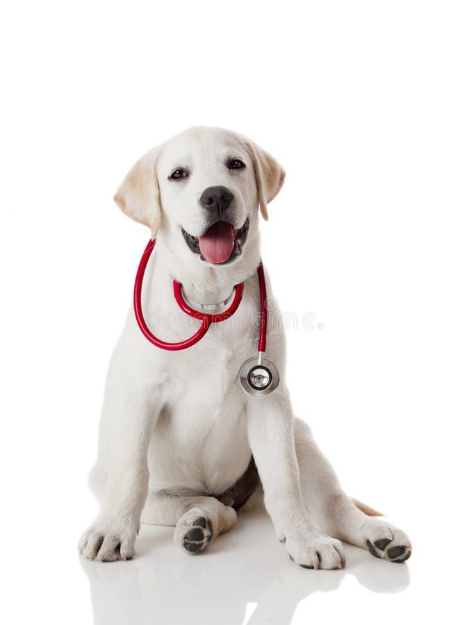 veterinarian собаки стоковое фото rf
