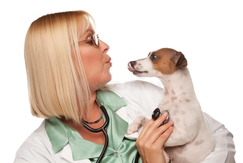 veterinarian щенка привлекательного доктора женский стоковые фотографии rf