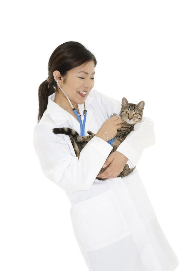 Asian woman Veterinarian examining a kitten royalty free stock images