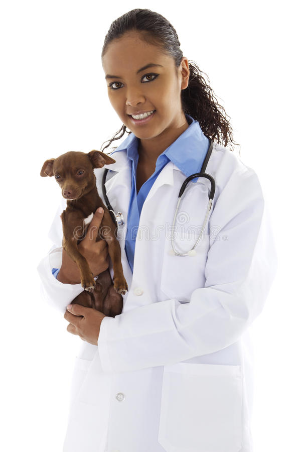 Veterinarian. Stock image of female veterinarian with small dog over white background stock image